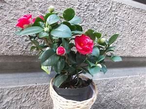 Bilder Für Wohnungsdekoration : bunte fr hlingsblumen bereichern visuell ihr heimdekor ~ Michelbontemps.com Haus und Dekorationen