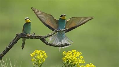 Birds European Animals Wallpapers Bird Flying Animal