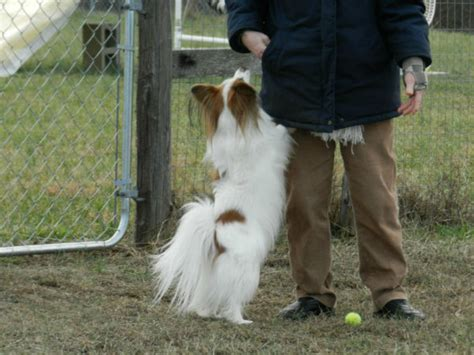 introduction  clicker training argos pet insurance