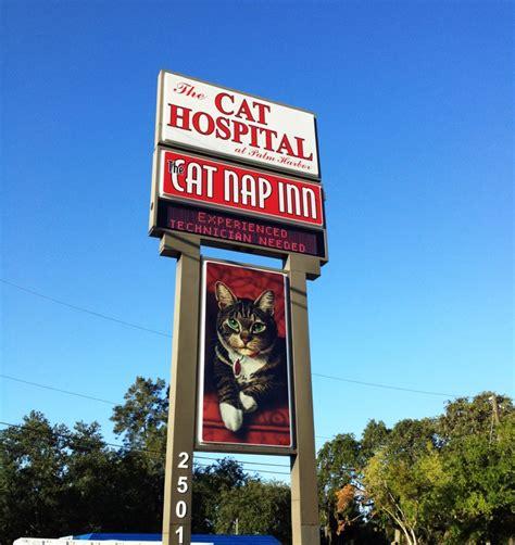 canap inn the cat nap inn cat hospital palm harbor florida