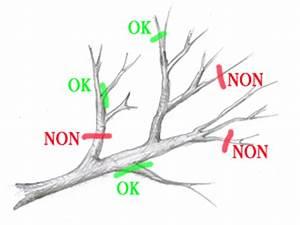 Comment Tailler Un Pommier : taille des arbres fruitiers conseils jardinage les ~ Dode.kayakingforconservation.com Idées de Décoration