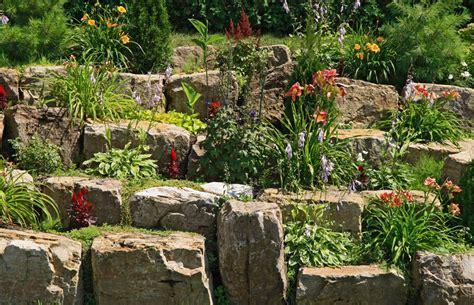 pflanzen für steinmauer trockenmauer bepflanzen 187 pflanzen mikroklimate