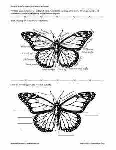 Monarch Butterfly Diagram And Labels In 2019