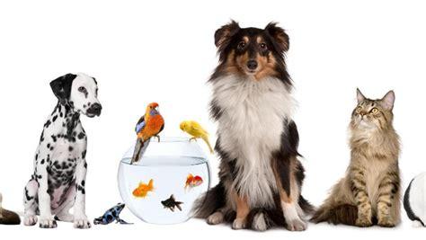 Wie Viel Kostet Eine Maus Als Haustier by Haustiere Die Beliebtesten Haustiere Und Ihre Kosten