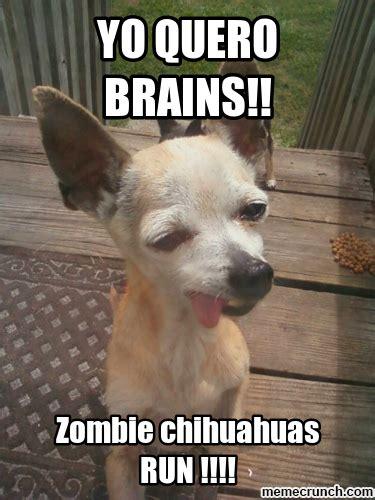 Meme Chihuahua - zombie chihuahua