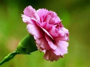 Vielfalt an Blumenarten Deko & Feiern, Hochzeit, Valentinstag ZENIDEEN