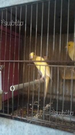 gabbie x uccelli usate batteria gabbie domus molinari posot class