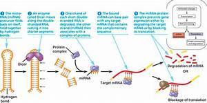 RNAi - Interference RNA
