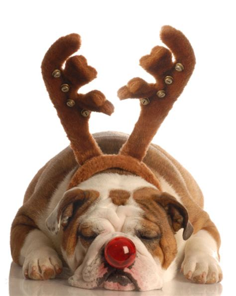 4 designer with reindeer antlers red nose puppy