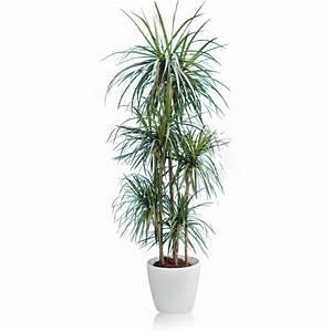 Livraison Plante Verte D Intrieur Photos De Magnolisafleur