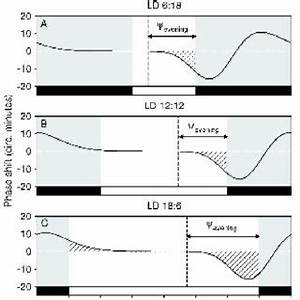 Pdf  Phase Response Curves Of Circadian Oscillators