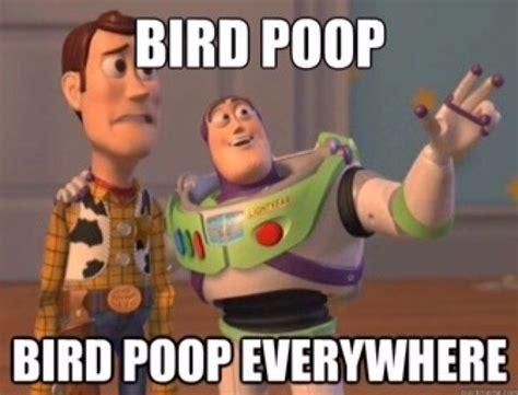 Bird Shit Meme - 14 best memes bird poop images on pinterest meme memes and animal pics