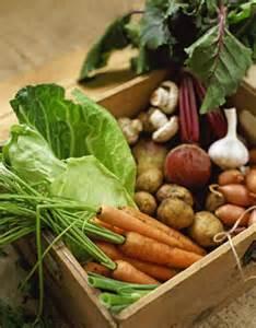 Root Vegetable Gardening
