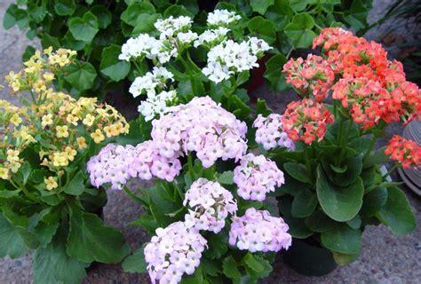 Best Flowering Indoor Plants