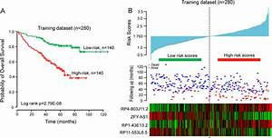Identification and validation of potential prognostic ...