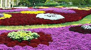 13 Most photogenic Gardens Flower HD Images ...