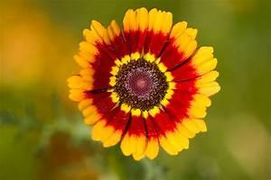 Bilder Blumen Kostenlos Downloaden : blumenbilder und blumenfotos kostenlos downloaden ~ Frokenaadalensverden.com Haus und Dekorationen
