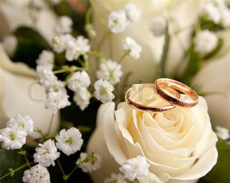 gold wedding rings  flower stock photo colourbox