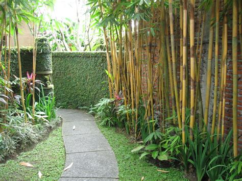backyard bamboo use bamboo along side garden effective and serves as privacy screen too gardening pinterest