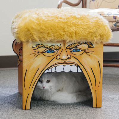donald trump pet playhouse  grab  cats attention