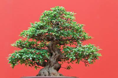 gluecksbaum mit geldscheinen dekorieren  gehts