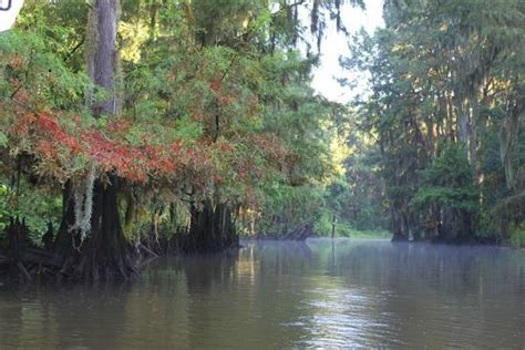Caddo Lake Boat Rental by Mill Pond The Cground Picture Of Caddo Lake