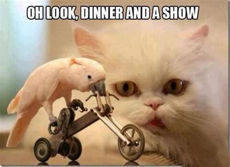 Funny Cat Memes Tumblr - hilarious cat memes tumblr image memes at relatably com