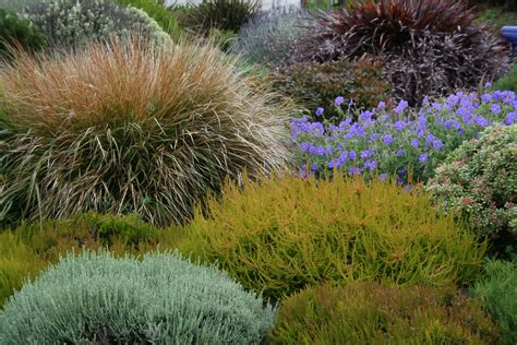 garden bushes coastal gardening how to garden on the seacoast north coast gardening