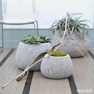 Pflanzen Kübel Beton : wohndeko grau gr ne zimmerpflanzen beleben interieur pflanzen drinnen pinterest gr n ~ Sanjose-hotels-ca.com Haus und Dekorationen