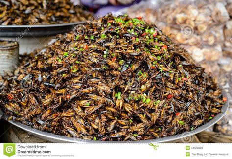 cuisine cambodgienne insects food at cambodia stock image image of dessert