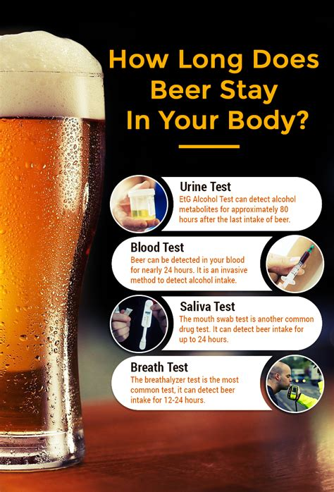 How Long Does Beer Stay In Your Body? ? Thelifesquare