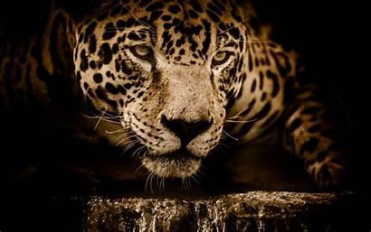 Jaguar 5k Wallpapers Hdwallpaperslife Amazing