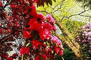 Arbustes Décoratifs à Fleurs : les meilleurs arbustes d ornement fruits d coratifs ~ Premium-room.com Idées de Décoration