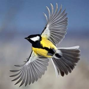 18 best images about fly on Pinterest | Flights, Great tit ...