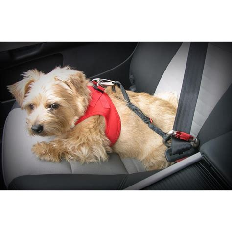 curli auto sicherheitsgurt car safty belt verschiedene