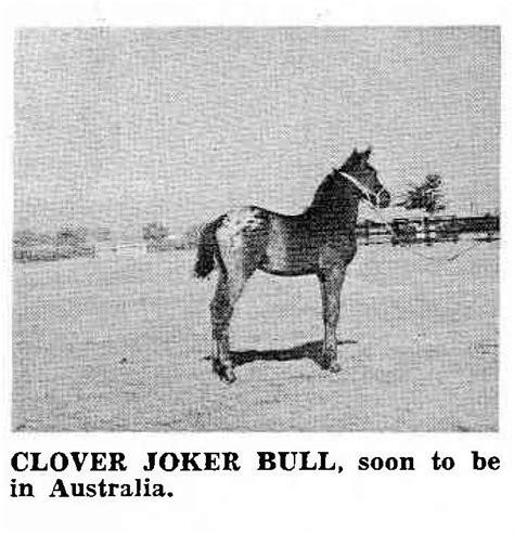 clover joker imp stud bull leaf appaloosa foal pic