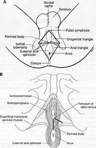 Perineal Area Men Related Keywords - Perineal Area Men ...