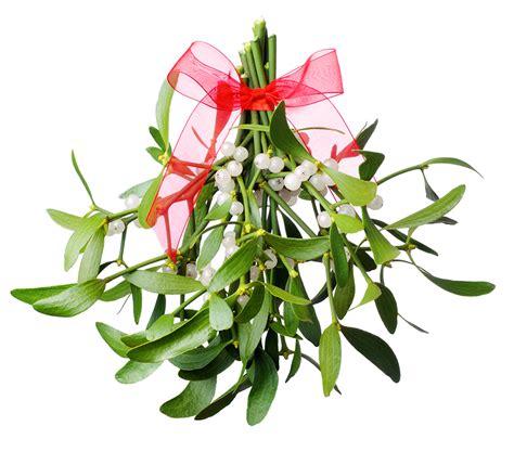 traditional christmas plants around the world