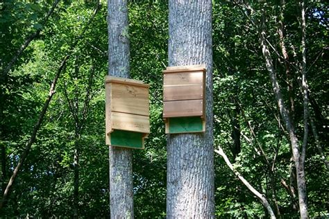 into the woods bat houses