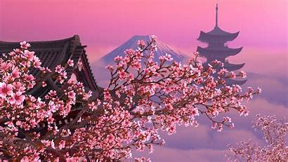 Sakura Screensaver 3d Blooming Animated Screenshots Desktop
