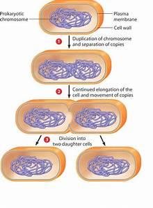 Chapt 8 Vocab  Cell  Reproduction  U0026 Genetics