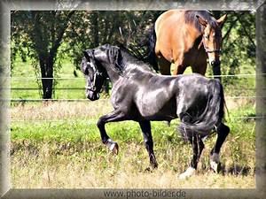 Pferdebilder Zum Ausdrucken Schwarzes Pferd Kostenlos