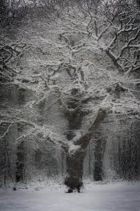 Beautiful Snow Woods