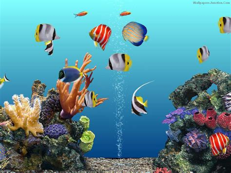 Free Animated Fish Wallpaper Windows 7 - free animated aquarium desktop wallpaper wallpapersafari