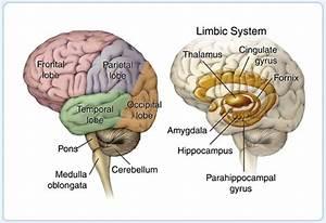 mercercognitivepsychology [licensed for non-commercial use ...