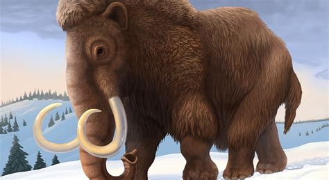 Why Did The Woolly Mammoth Die Out?  National Geographic