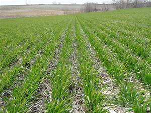 Winter Wheat Nitrogen Applications