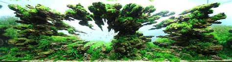 Ada Aquascaping Contest by The Underwater Of Competitive Aquascaping