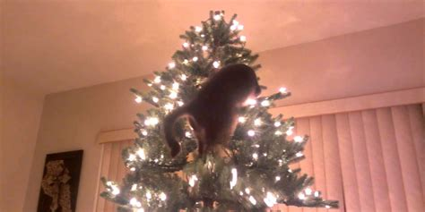 cats  christmas trees  compilation