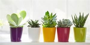 Succulent Plants DIY